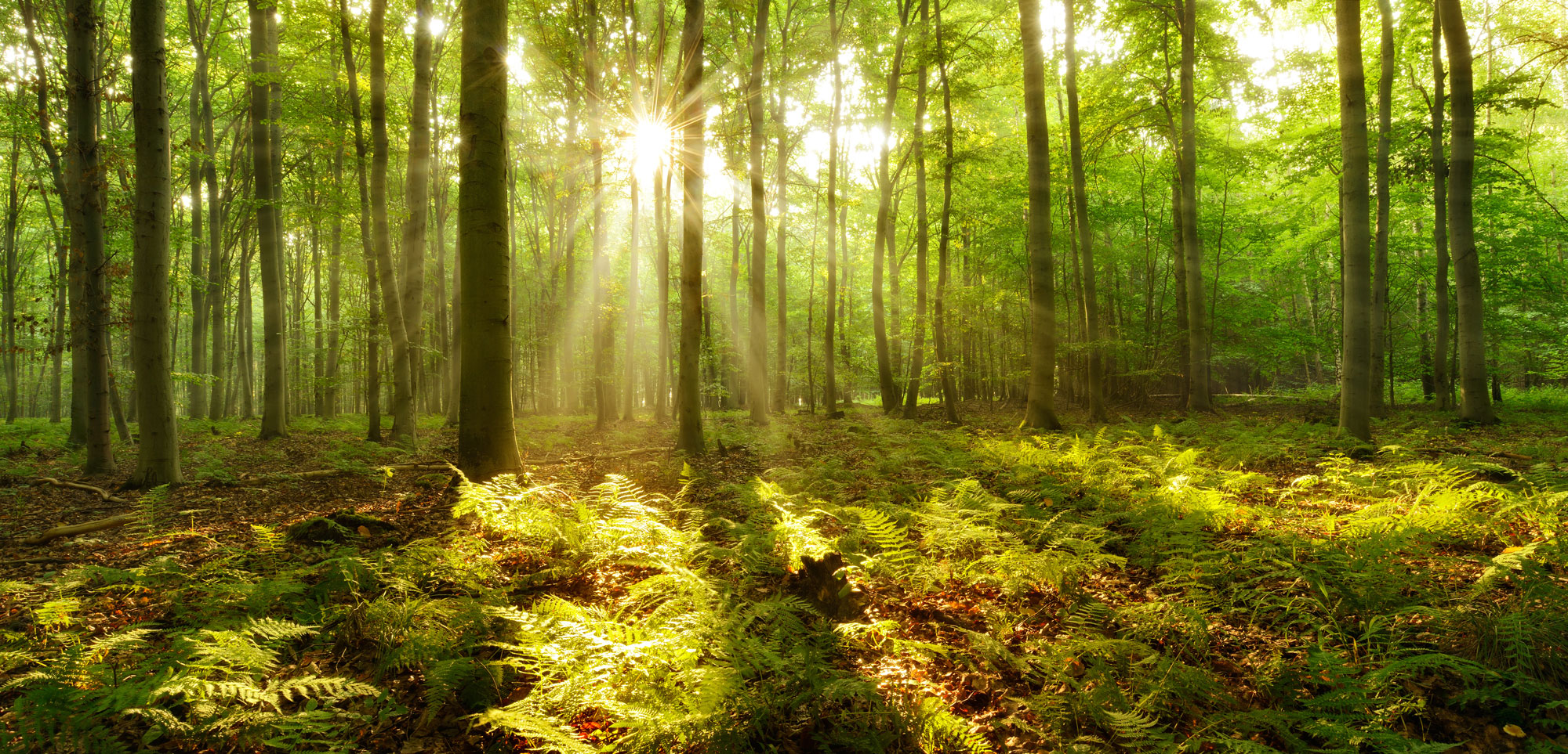 Sunlight breaking through woodland trees